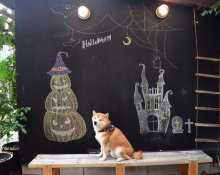 Halloween フォトコンテスト!10/1~10/31